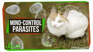 Download How Mind-Controlling Parasites Teach Us About Brains Video