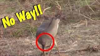 Download Buck Comes Back After Being Shot By Bow Hunter!! Video