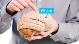 Download Your Amazing Brain - Dementia Explained - Alzheimer's Research UK Video