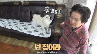 "Download ""뭔 개소리여.."" 할매 쿨하신거 보소ㅣThe dog only barks when it sees grandma Video"