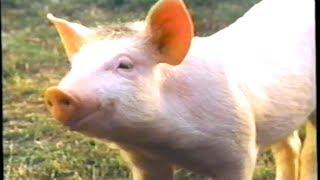 Download Babe (1995) Trailer (VHS Capture) Video