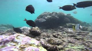 Download 2 minutes sous l'eau à la Réunion Video