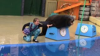Download Sea Lions Tonite 2015 (Full Show) at SeaWorld San Diego (6/16/15) Video
