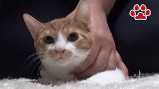 Download Flea of prophylactic Maya 【Cat's room.Miaou】 Video