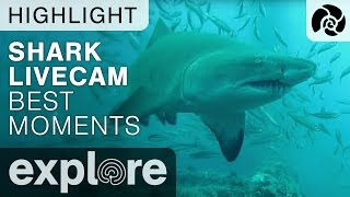 Download Cape Fear Shark Live Cam Best Moments Compilation - Live Cam Highlight Video