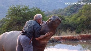 Download Meet eMMa – A hippo that was rescued when she was just a week old! Video