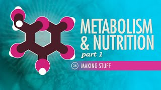 Download Metabolism & Nutrition, part 1: Crash Course A&P #36 Video