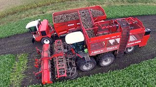 Download 12 row Sugarbeet harvesting | Rovers Boekel l Holmer / Agrifac Hexx Traxx 12 | Gilles overlaadwagen Video