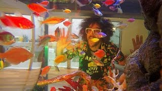 Download Redfoo's Party Rock Tank Video