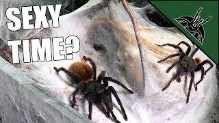 Download Tarantula LOVE LIFE STRUGGLE continues... Video