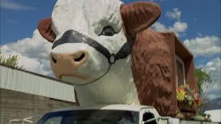 Download Cowzilla in Colorado Video