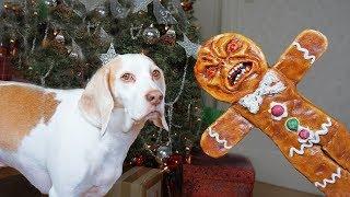 Download Dogs vs Evil Gingerbread Man Prank: Funny Dogs Maymo & Potpie Video