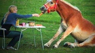 Download Funny Horses 🐴🐴 Funny Horses Moments And Fails (Full) [Funny Pets] Video
