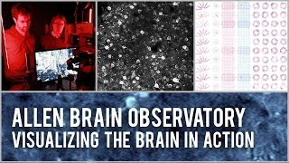 Download Allen Brain Observatory: Visualizing the brain in action Video