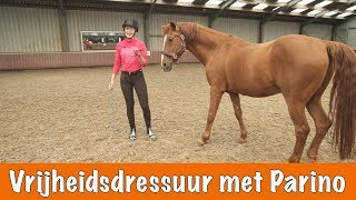 Download Vrijheidsdressuur met Parino + Winnaars Horse Event | PaardenpraatTV Video