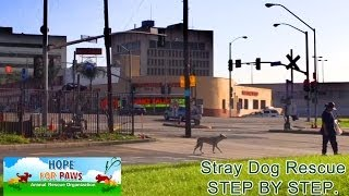 Download Stray dog rescue - step by step. Video