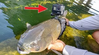 Download I Strapped a GoPro on a Fish Video