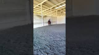 Download NR AMERICANO II - PRE stallion for sale dressage prospect #thebestspanishhorses Video