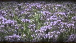 Download Destruction des couverts, optez pour la technique la plus appropriée Video