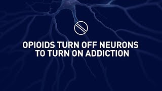 Download Why the human brain loves opioids Video