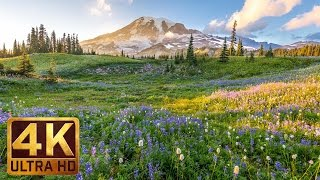 Download (3 hours) 4K UHD Relaxation video: Mount Rainier National Park Washington State, Nature Sounds - 1 Video