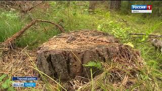 Download вырубка леса Video
