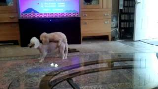 Download Lesbian Dogs Video