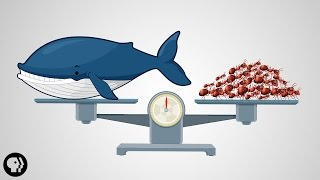 Download What's The Most Successful Species on Earth? Video