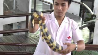 Download Red Cross Snake Farm-Bangkok Video