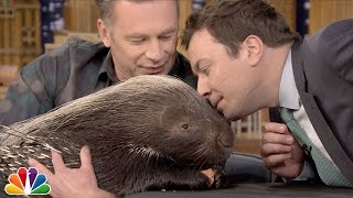 Download Chris Packham and Jimmy Sniff an African Porcupine Video