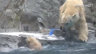 Download Help me! Polar Bear cub can't swim yet ~助けて!お母さん〜水に落ちたこぐま Video