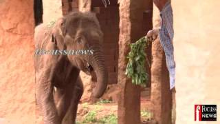 Download COIMBATORE MANGARAI ELEPHANT CALF DEATH Video