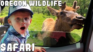 Download THERE'S A MOOSE EATING MY CAR!! Video
