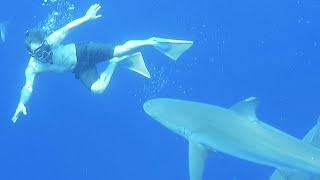 Download SWIMMING WITH SHARKS! (I Almost Was Bit!) Video