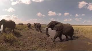 Download 360 VR Video of Ngoma Safari Lodges - Africa Albida Tourism, Botswana Video