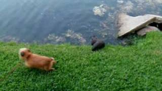 Download Otter and dog make cute friends Video