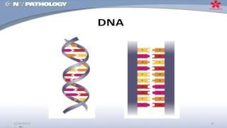 Download Basic Scientific Principles of Molecular Pathology Techniques Video