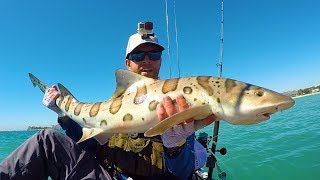 Download Leopard Sharks & Calico Bass | #FieldTrips West Coast Video