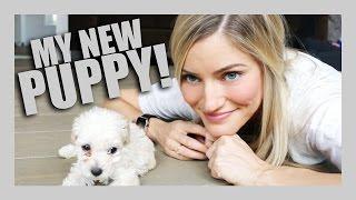 Download I GOT A PUPPY!   iJustine Video