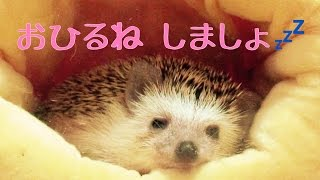 Download 【安眠】つゆをながめて眠くなる動画 Take nap with Tsuyu Video