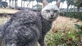 Download 公園の野良猫が「ついてきて!」と言うので着いていってみたら Video