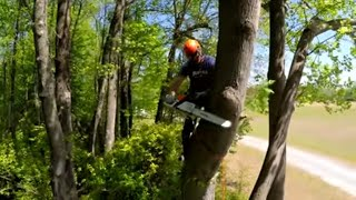 Download How to Top a Tree That's Too Tall to Drop Video