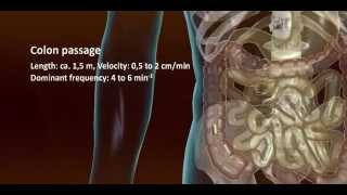 Download New drug development remote controlled drug release into the GI tract Video