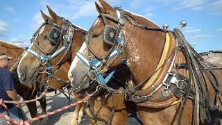 Download Draft Horse Pull 2016 in 4k UHD Video