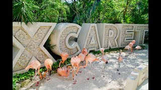 Download XCARET PARK - Mexico's Majestic Paradise Video