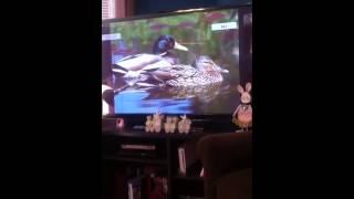 Download Baby einstein animals flash cards Video