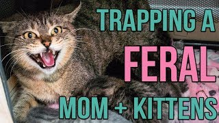 Download Reuniting a Feral Cat and Her Kittens! Video