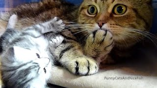 Download Top Playing and Dancing Cats and Kittens videos Video