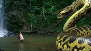 Download piranhaconda trailer Video