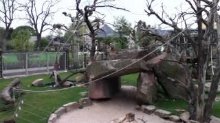 Download Zoo Guitar- Monkeys go Ape for ″Hey, Mr. Monkey Man″ Video